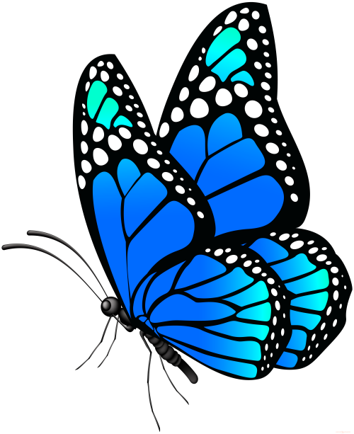 Butterfly-Png-Hd-301e4f703d47b4a66.png