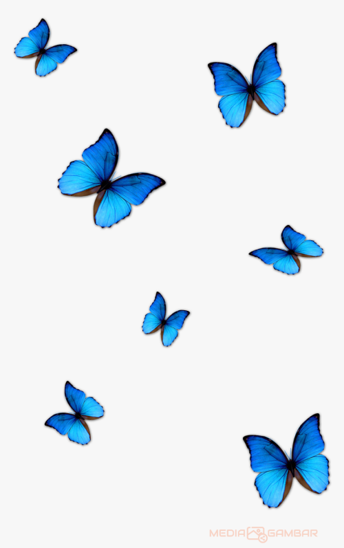 Butterfly-Png-Hd-4b827ba59f307646a.png