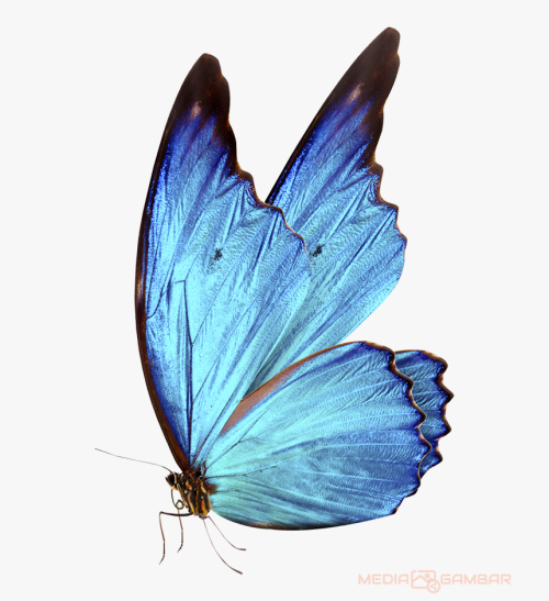 Butterfly Png Hd 5