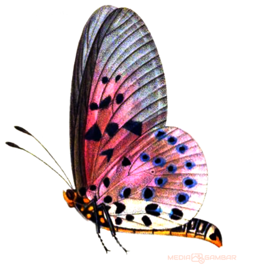 Butterfly-Png-Hd-6fadc73e940fdfe58.png