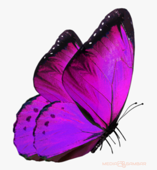 Butterfly-Png-Hd-8fba2589bd8198a15.png