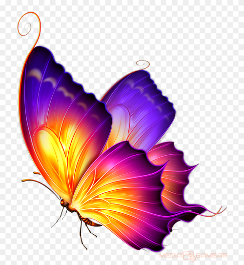 Butterfly Png Hd